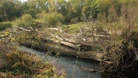 Εσωτερικός του δέλτα ποταμός ποταμών στο δάσος κοιτών πλημμυρών, Litovelske Pomoravi, χρώματα φθινοπώρου, δέντρα πεσμένος απόθεμα βίντεο