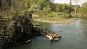 Εσωτερικός του δέλτα ποταμός ποταμών στο δάσος κοιτών πλημμυρών, Litovelske Pomoravi, χρώματα φθινοπώρου, δέντρα πεσμένος φιλμ μικρού μήκους