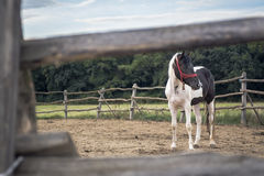 Εσωτερικό άλογο Στοκ φωτογραφία με δικαίωμα ελεύθερης χρήσης