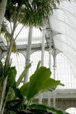 Εσωτερικό βικτοριανό θερμοκήπιο Στοκ εικόνες με δικαίωμα ελεύθερης χρήσης