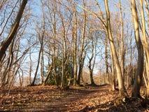 εσωτερικό ξύλο με πολλούς ψηλή δασική δασώδης περιοχή κορμών δέντρων γυμνή Στοκ φωτογραφία με δικαίωμα ελεύθερης χρήσης