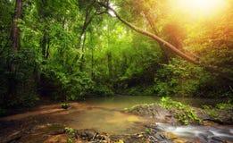 Εσωτερικό στη ζούγκλα τροπικών δασών με τις τροπικές εγκαταστάσεις και το φως ήλιων Στοκ Εικόνα