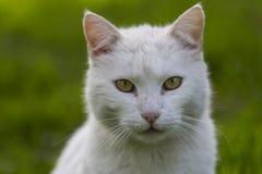 Εσωτερικό cat Στοκ Φωτογραφία