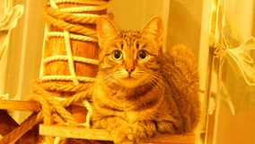 Εσωτερικό cat Στοκ φωτογραφία με δικαίωμα ελεύθερης χρήσης