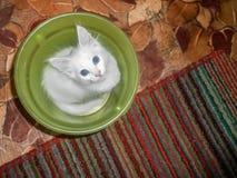 Εσωτερικό cat Στοκ Εικόνες