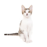 Εσωτερικό cat Στοκ εικόνα με δικαίωμα ελεύθερης χρήσης