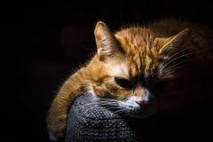 Εσωτερικό cat Στοκ φωτογραφίες με δικαίωμα ελεύθερης χρήσης