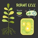Εσωτερικό theplant κύτταρο Στοκ Εικόνες