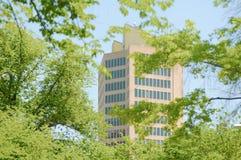 Εταιρική υψηλή άνοδος πίσω από τα δέντρα Στοκ εικόνες με δικαίωμα ελεύθερης χρήσης