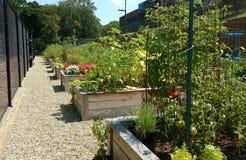 Εταιρικός κοινοτικός κήπος Στοκ Φωτογραφίες