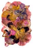 Ετερόκλητο πολύχρωμο καθάρισμα applique των ξηρών πιεσμένων λουλουδιών Στοκ Φωτογραφίες