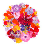 Ετερόκλητο πολύχρωμο καθάρισμα applique των ξηρών πιεσμένων λουλουδιών Στοκ Εικόνες