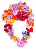 Ετερόκλητο πολύχρωμο καθάρισμα applique των ξηρών πιεσμένων λουλουδιών Στοκ εικόνες με δικαίωμα ελεύθερης χρήσης