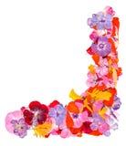 Ετερόκλητο πολύχρωμο καθάρισμα applique των ξηρών πιεσμένων λουλουδιών Στοκ φωτογραφία με δικαίωμα ελεύθερης χρήσης