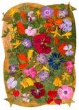 Ετερόκλητο πολύχρωμο καθάρισμα applique των ξηρών πιεσμένων λουλουδιών Στοκ Εικόνα