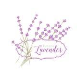 Ετικέτα με lavender Στοκ Εικόνες
