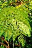 Ευαίσθητα φύλλα φτερών Στοκ Φωτογραφίες