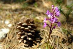 Ευγενές λουλούδι στοκ φωτογραφίες με δικαίωμα ελεύθερης χρήσης