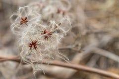 Ευγενές λουλούδι φθινοπώρου Στοκ φωτογραφία με δικαίωμα ελεύθερης χρήσης