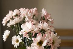 Ευγενής ρομαντική ζωή λουλουδιών ακόμα στοκ εικόνα