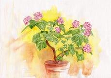 Ευγενή λουλούδια Watercolor Στοκ Εικόνα