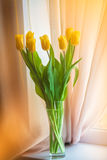 Ευγενείς κίτρινες τουλίπες στο windowsill κοντά στο παράθυρο το πρωί στοκ εικόνες με δικαίωμα ελεύθερης χρήσης