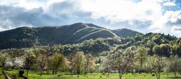 Ευδιάκριτο πανοραμικό τοπίο με την πράσινους χλόη, τους λόφους και τα δέντρα, ηλιόλουστος καιρός, νεφελώδης ουρανός στοκ εικόνες