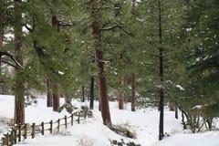 Ευδιάκριτο χιονώδες δάσος Στοκ φωτογραφία με δικαίωμα ελεύθερης χρήσης