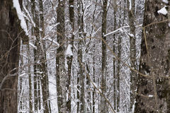Ευθυγραμμισμένα δέντρα Στοκ φωτογραφία με δικαίωμα ελεύθερης χρήσης