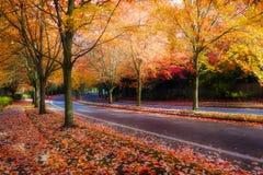 Ευθυγραμμισμένη δέντρα οδός σφενδάμνου κατά τη διάρκεια της εποχής πτώσης στοκ φωτογραφία με δικαίωμα ελεύθερης χρήσης
