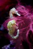 ευθυγραμμισμένος seahorse στοκ εικόνες