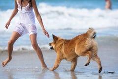Ευθυμία παιχνιδιού κοριτσιών και σκυλιών στην παραλία στοκ φωτογραφίες