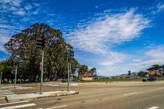 Ευκάλυπτος στο Σαν Φρανσίσκο Στοκ φωτογραφίες με δικαίωμα ελεύθερης χρήσης