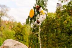 Ευκίνητο άλμα από το σκυλί που κάνει τα τεχνάσματα με τον πετώντας δίσκο Στοκ φωτογραφίες με δικαίωμα ελεύθερης χρήσης