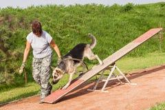 Ευκινησία αθλητικής στιγμής σκυλιών με το σκυλί της Γερμανίας Shepperd στοκ φωτογραφία