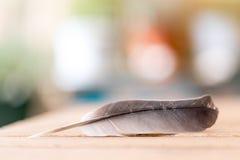 Ευκολία: Φτερό σε ένα ξύλινο γραφείο, διάστημα αντιγράφων στοκ φωτογραφία