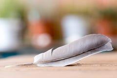 Ευκολία: Φτερό σε ένα ξύλινο γραφείο, διάστημα αντιγράφων στοκ εικόνες