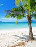 λευκό δέντρων άμμου των Φιλιππινών malcapuya νησιών παραλιών coron πράσινο Στοκ Εικόνα