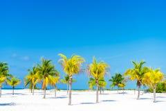 λευκό δέντρων άμμου φοινικών παραλιών βραδύτατο sirena playa της Κούβας cayo χρωματισμένος cayo βραδύτατος πολυ φοίνικας τρία της στοκ εικόνες