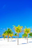 λευκό δέντρων άμμου φοινικών παραλιών βραδύτατο sirena playa της Κούβας cayo χρωματισμένος cayo βραδύτατος πολυ φοίνικας τρία της στοκ φωτογραφία με δικαίωμα ελεύθερης χρήσης