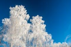 λευκό δέντρων μπλε ουρανού Στοκ Φωτογραφίες