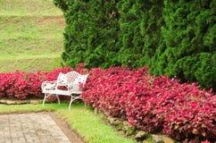 λευκό κήπων πάγκων Στοκ Φωτογραφία