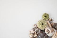 λευκό κοχυλιών ανασκόπησης Στοκ εικόνες με δικαίωμα ελεύθερης χρήσης