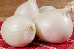 λευκό κρεμμυδιών στοκ φωτογραφία