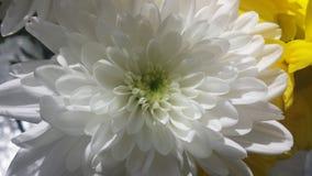 λευκό λουλουδιών Στοκ Φωτογραφίες