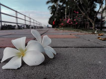 λευκό λουλουδιών Στοκ εικόνες με δικαίωμα ελεύθερης χρήσης