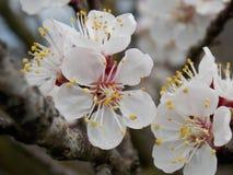 λευκό λουλουδιών Στοκ εικόνα με δικαίωμα ελεύθερης χρήσης