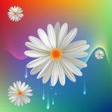 λευκό λουλουδιών απεικόνιση αποθεμάτων