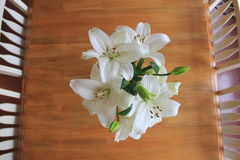 λευκό λουλουδιών Στοκ Εικόνες