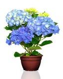λευκό δοχείων απομόνωσης λουλουδιών Στοκ φωτογραφία με δικαίωμα ελεύθερης χρήσης